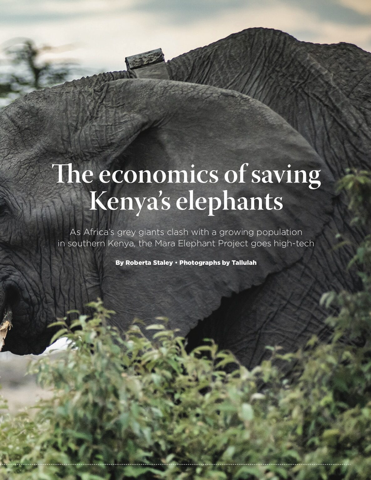 The cost of Saving an Elephant