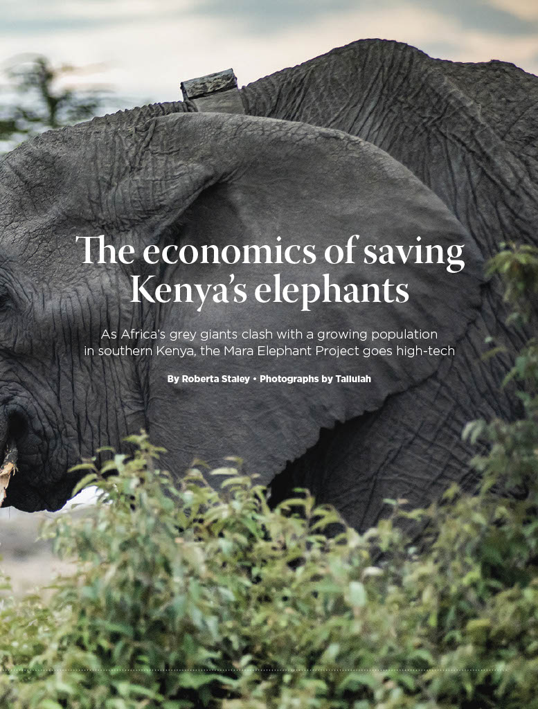 The Economics of Saving Kenya's Elephants by Roberta Staley